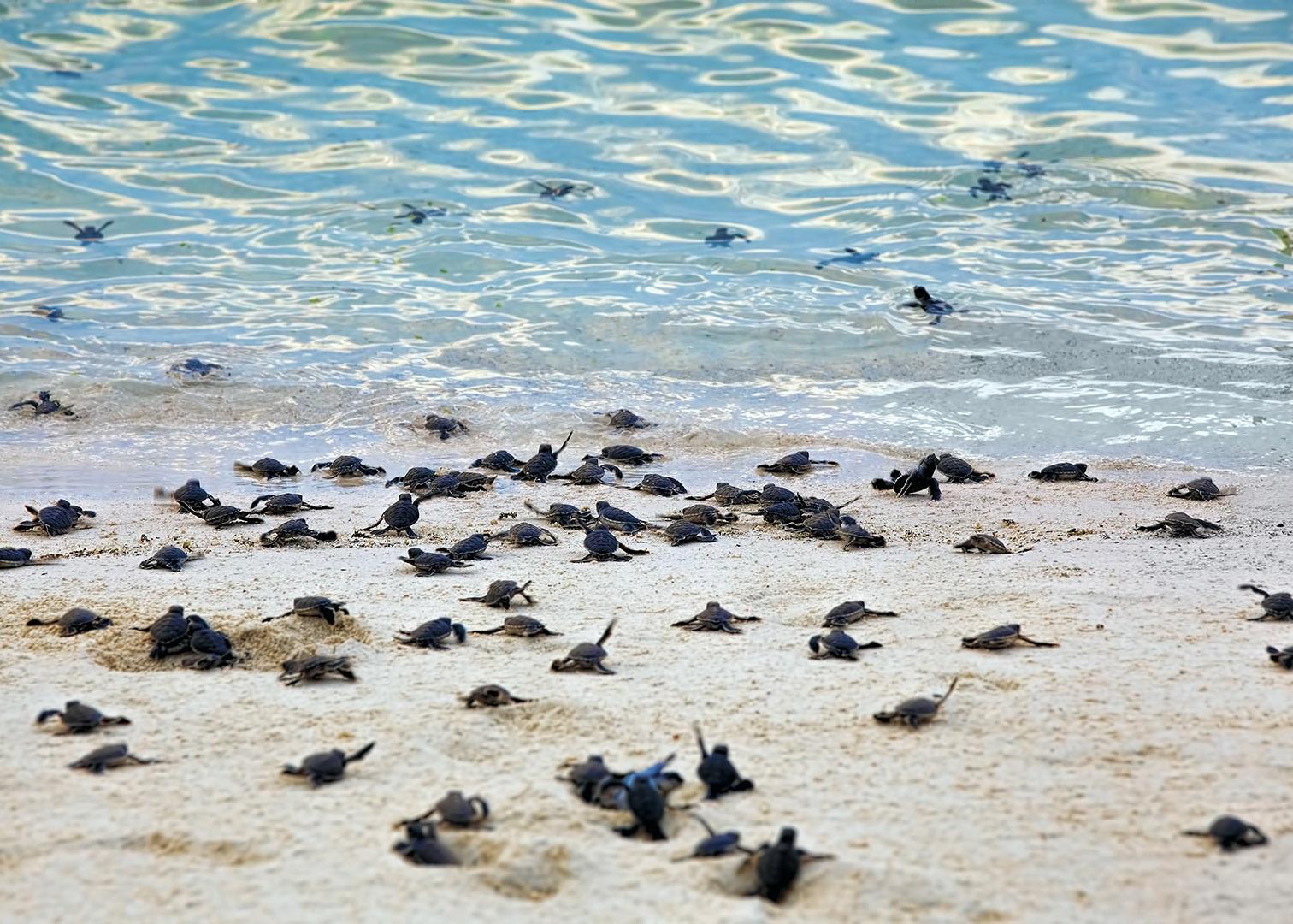 Картинки по запросу Национальный парк Черепаховые острова малайзия
